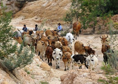 cattle-drive-teambuilding_orig